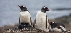 How much does an Antarctica cruise cost?
