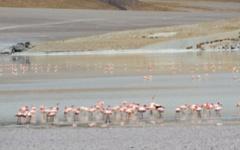 Parinas Chicas Flamingos at Laguna Grande - Off Road Puna Adventure
