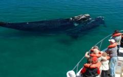 Whale spotting - Peninsula Valdes